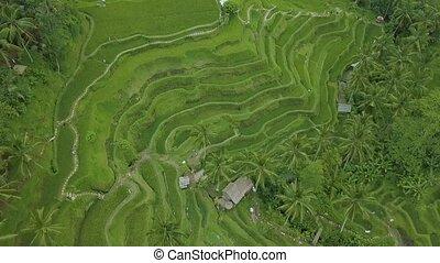 Pueblos Akha En Savia Vietnam Magnífica Terraza De Arroz