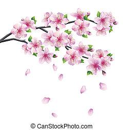 -, virágzás, fa, japán, sakura, elágazik, cseresznye