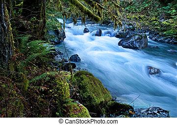 -, washington, nooksack, montanha, rio, floresta