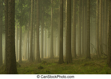 01, 霧, 森林