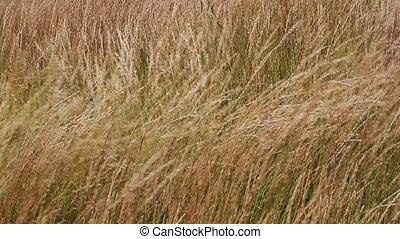 01, prairie, vent, herbe
