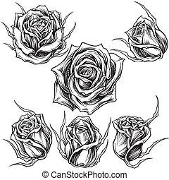 01, vecteur, roses, ensemble