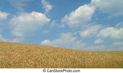 02, blé, défaillance, contre, temps, nuages