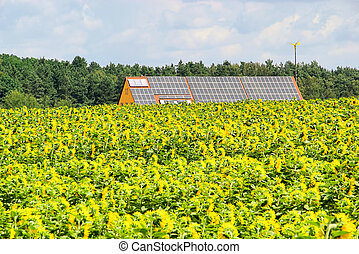 02, campo, planta, solar, girassol