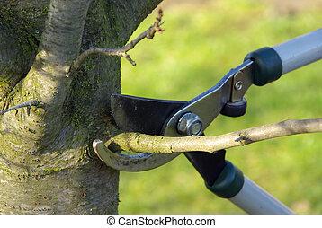 02, corte, árvore