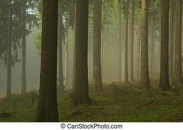 02, köd, erdő