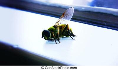02, konający, pszczoła