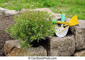 02, piantatura, arbusto