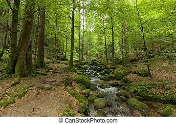 02, rastro, floresta preta, hiking