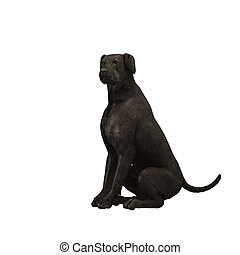 02, schwarz, -, labradorhundapportierhund