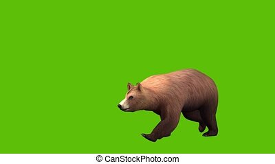 05 animated 3d bear walking with green screen