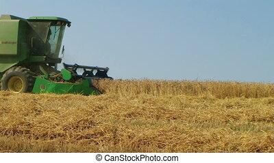 06, récolte, blé, combiner