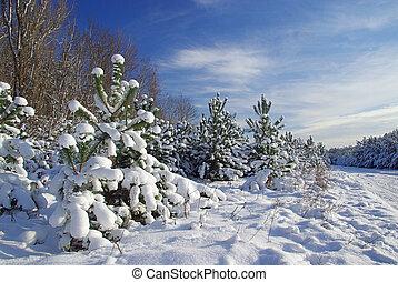 07, inverno, floresta
