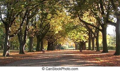 0754 autumn trees 001