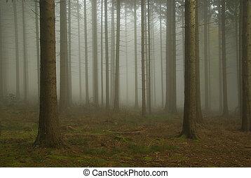 08, nebel, wald