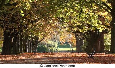 0952 autumn trees