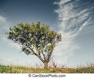 1, árvore, em, campo