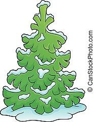 1 , κωνοφόρος , θέμα , δέντρο , εικόνα
