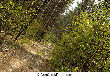 1, יער