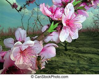 1, 春, さくらんぼ, 蜂