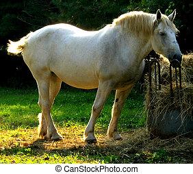 1, 马, 白色