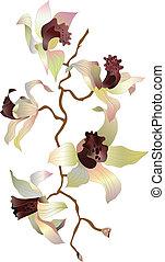 1, branche, orchidée