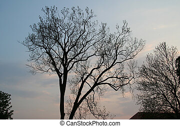 1, branches