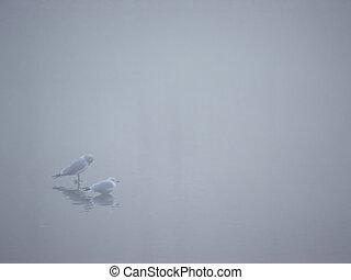 1, brume, oiseaux