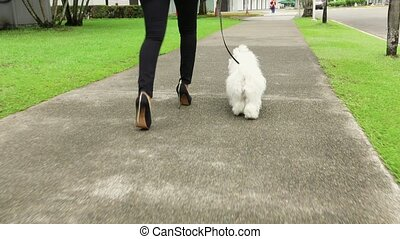 1 Businesswoman Commuting To Office With Her Dog - Young...