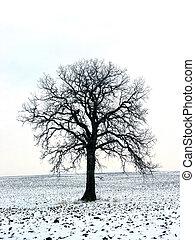 1, campo, inverno árvore