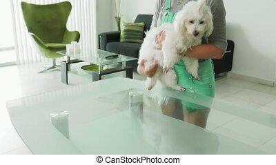 1-Dog Owner Inspecting Mouth Dental Hygiene Of Pet Teeth -...
