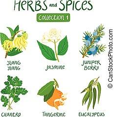1, erbe, spezie, collezione