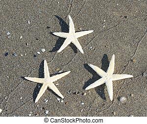 1, etoile mer, trois, exotique, mer, plage