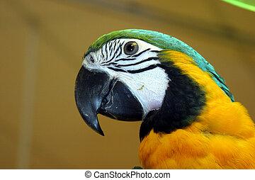 #1, fåglar
