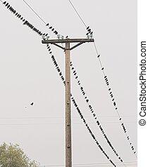 1, fil, oiseaux