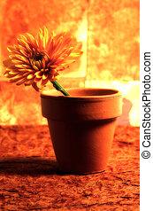 1, fleur, potted