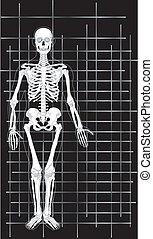 1, geschaeftswelt, skelett, karte
