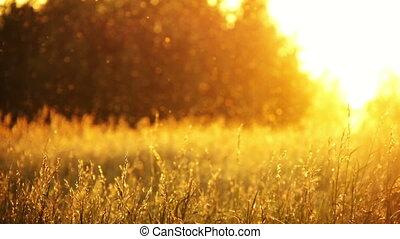 1, herbe champ, coucher soleil