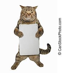 1, kat, tegn, blank