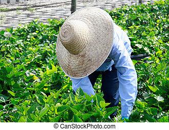 1, ouvrier agricole, crèche, -