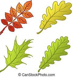 1, piante, foglie, set