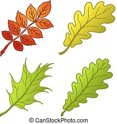 1, plantas, hojas, conjunto