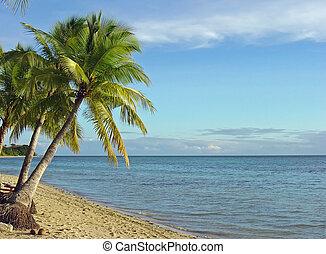 1, playa, fijian, árboles de palma