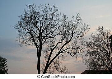 1, ramos