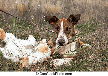 dog lying on the grass in a meadow with a white toy, autumn