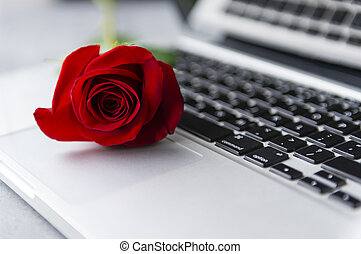 rose flower with red petals on silver laptop keyboard