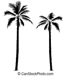 1, silhuet, håndflade træ