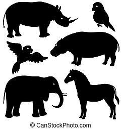 1, silhuetter, sæt, dyr, afrikansk