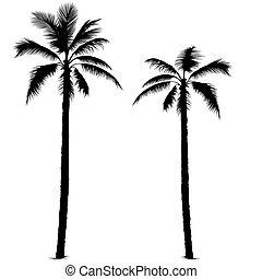 1, silueta, árvore palma
