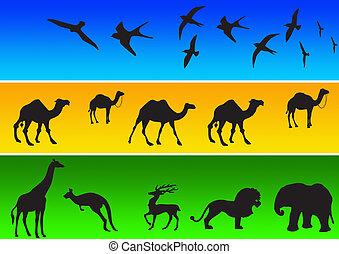 1, siluetas, animal